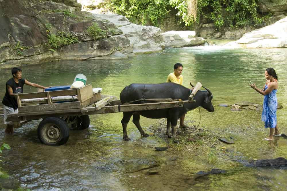 Carabao Ride in Puerto Galera